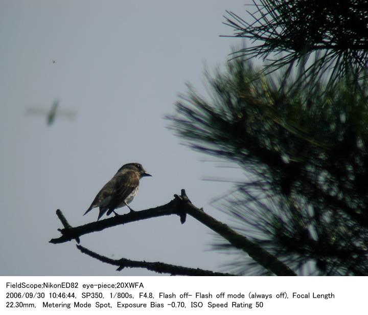 2006.9.30(2) 八丁湖公園_c0062451_21525988.jpg