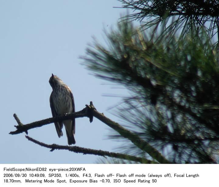 2006.9.30(2) 八丁湖公園_c0062451_21532017.jpg