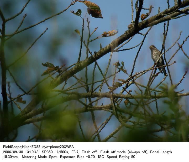 2006.930(3) 八丁湖公園_c0062451_2215799.jpg