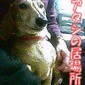 b0108053_6453730.jpg