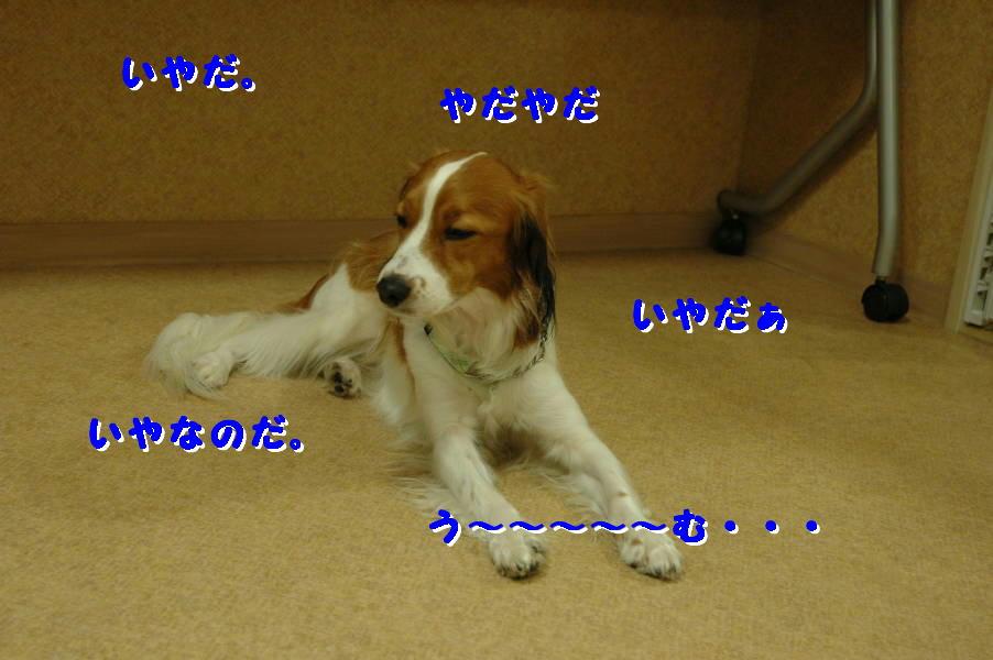 c0075585_154175.jpg