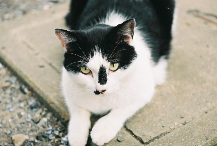 猫にも個性が_f0042194_19531922.jpg