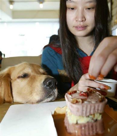 甘味料キシリトール、犬には危険_b0052564_1673131.jpg