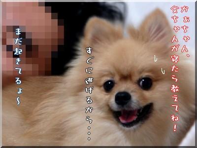 b0078073_105175.jpg