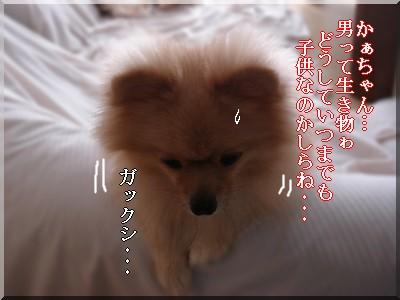 b0078073_1072830.jpg