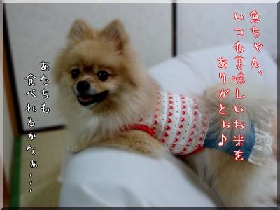 b0078073_952770.jpg