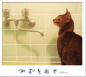 お風呂好き_d0084214_1234189.jpg
