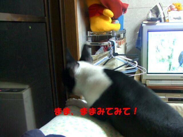 f0059334_8355021.jpg