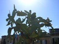23日 06夏 南イタリアへの旅  シチリア島 アグリジェントへ_a0059035_21105981.jpg