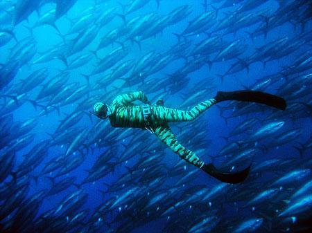 魚の大群と遊泳_b0052564_14561626.jpg