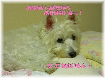 f0039907_2314058.jpg
