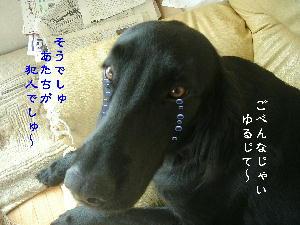 f0066824_1533348.jpg