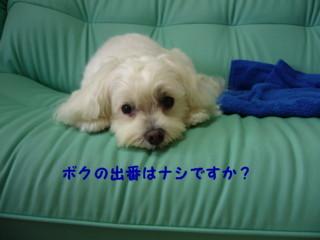 f0005727_1693581.jpg