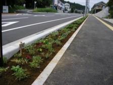 木花小学校の花の植栽と杉ネームプレート_f0105533_0574464.jpg