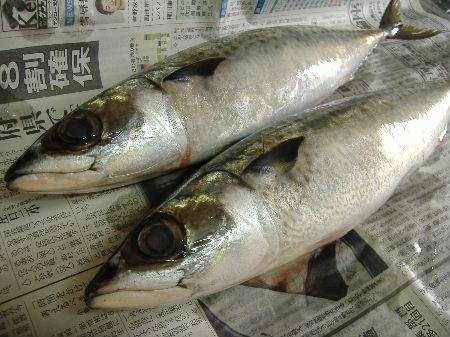 魚をおろす_f0082141_5315224.jpg