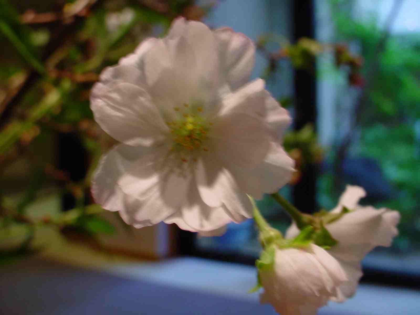 秋の桜_f0040201_23461344.jpg