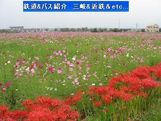 VOL,346 北勢線と彼岸花&コスモス畑(10/4)_e0040714_12342171.jpg