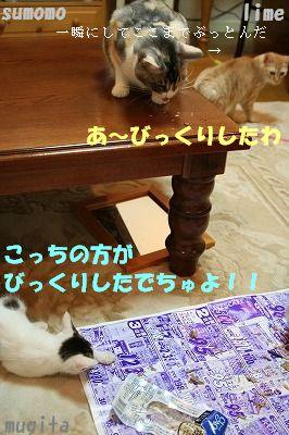 f0063729_922383.jpg