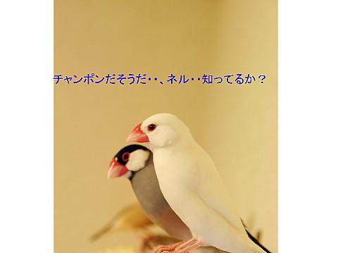 a0019545_2271925.jpg