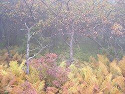 霧の入笠湿原・植物観察会2006秋_f0019247_2230514.jpg