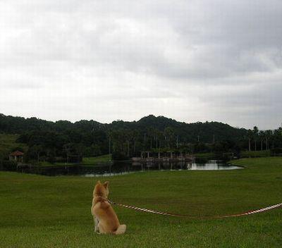 2006年10月4日(水)・・・あぁ月下美人が・・・_f0060461_10135591.jpg