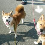 2006年秋季日本犬保存会北九州支部展_b0057675_10225878.jpg