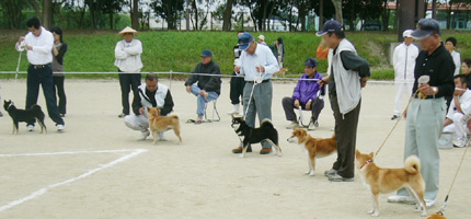 2006年秋季日本犬保存会北九州支部展_b0057675_1052482.jpg
