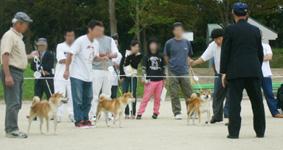 2006年秋季日本犬保存会北九州支部展_b0057675_1062286.jpg