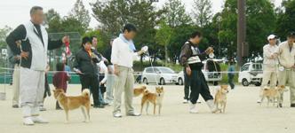 2006年秋季日本犬保存会北九州支部展_b0057675_1064874.jpg