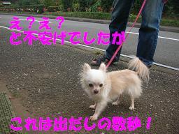 c0004744_1905621.jpg