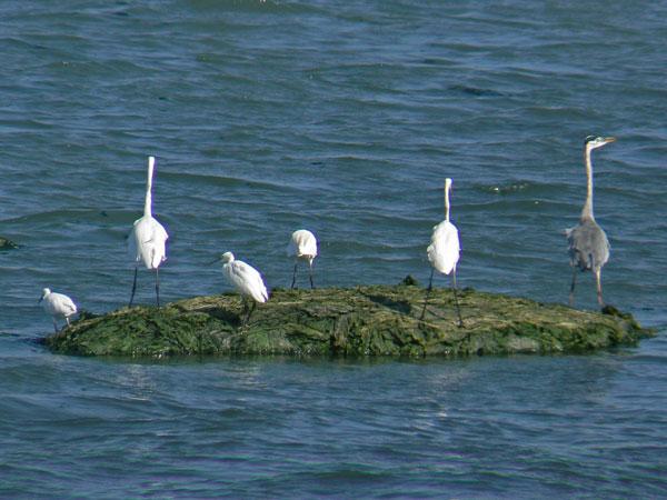 海草の浮島の鳥さんたち_e0088233_23511678.jpg
