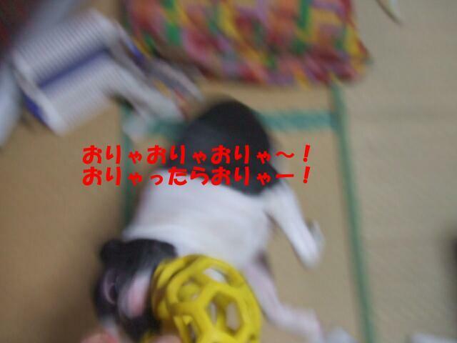 f0059334_95804.jpg