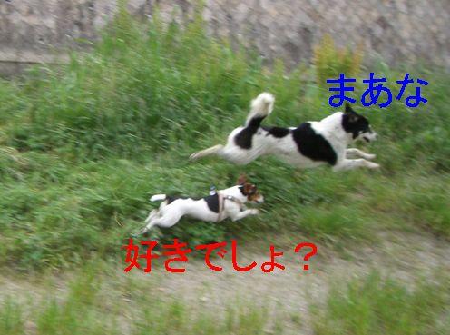 f0053952_131045.jpg