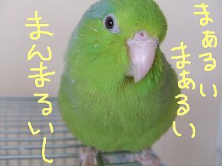 b0082757_2261956.jpg