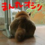 こぼれ話/ふと見ると、、_b0057675_1039996.jpg
