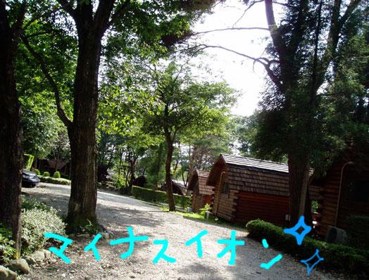 キャンプ\(^∀^)メ(^∀^)ノ _c0038100_4393112.jpg