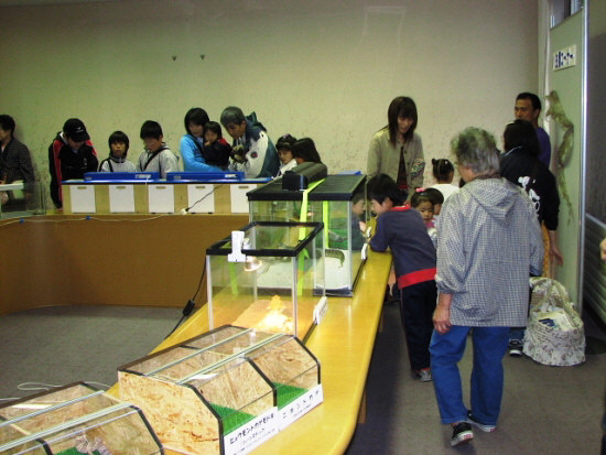 10月8日(日):昨日の大ハ虫類展・昆虫展_e0062415_12121354.jpg
