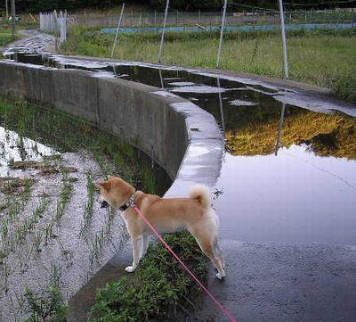 2006年10月7日(土)・・・豪雨の翌日_f0060461_1785069.jpg