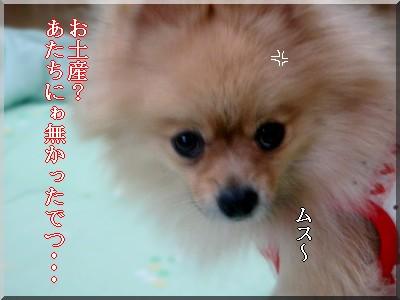 b0078073_11251351.jpg