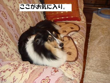 f0046854_15514831.jpg