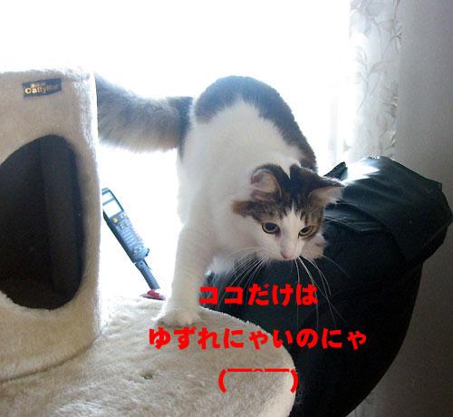 b0064663_1614012.jpg
