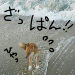 砂浜にて_b0057675_10574115.jpg