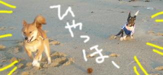 砂浜にて_b0057675_10582424.jpg