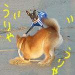 砂浜にて_b0057675_10585026.jpg