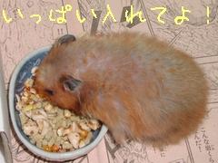 b0016983_18415848.jpg