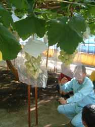 岡山へ葡萄の視察へ。_f0018099_18174725.jpg