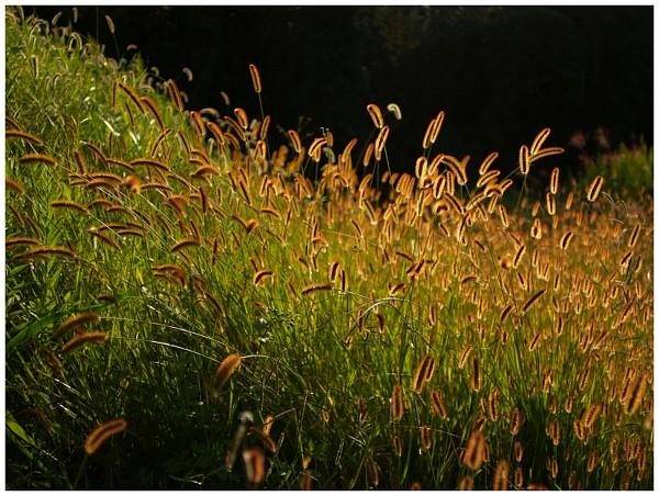 ディスタゴン2.8/25で夕焼けを撮る_c0042324_1112999.jpg