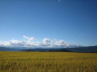 八ヶ岳クラフトフェア 1_b0100229_15305450.jpg
