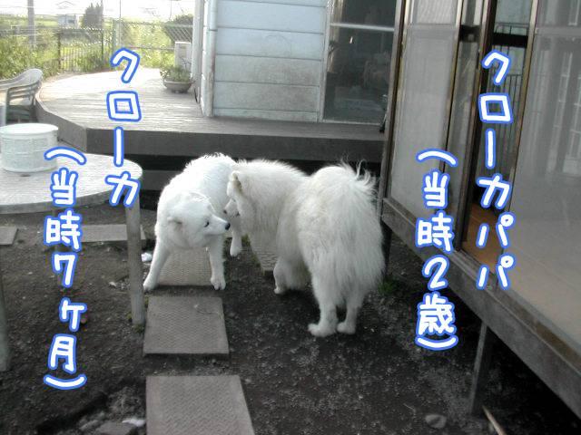 オフ会こぼれネタ_c0062832_175289.jpg