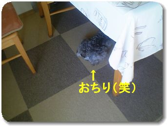 d0048951_16593827.jpg